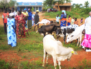 Hope for Widows Project: Families with children and the Cow Scheme